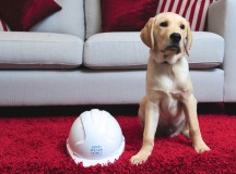 Guide dog puppy, Wilson, sponsored by David Wilson Homes